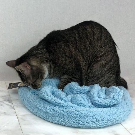 Лежанка для кошек CatGenie BlanCat