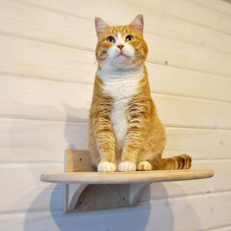 """Полочка для кошек """"Рикай"""""""