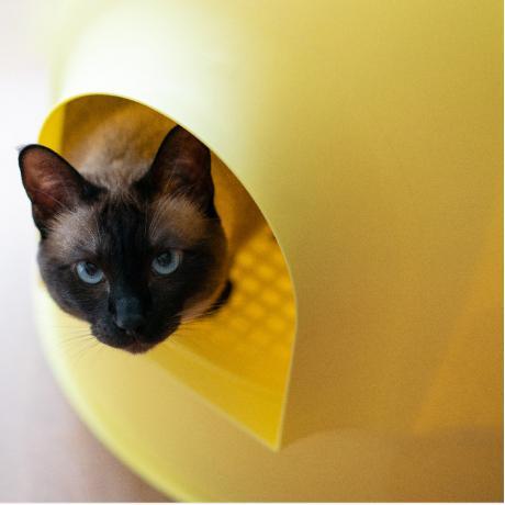 """Закрытый лоток для кошки Pidan """"ИГЛУ"""", желтый"""