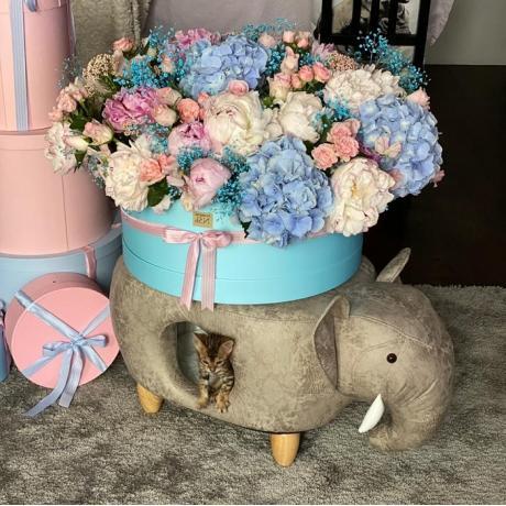 Домик-пуфик для кошек Слон
