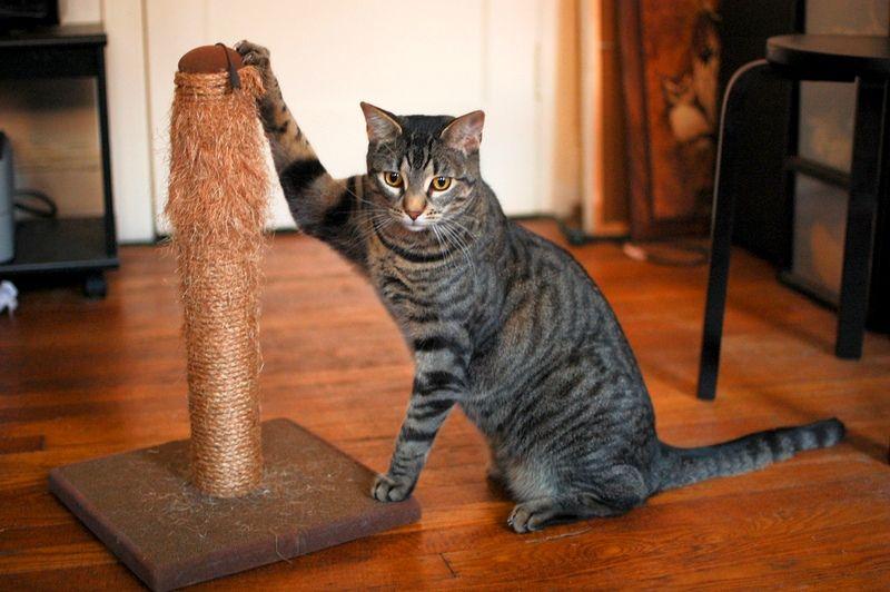 Как выбрать и купить когтеточку для кошки?